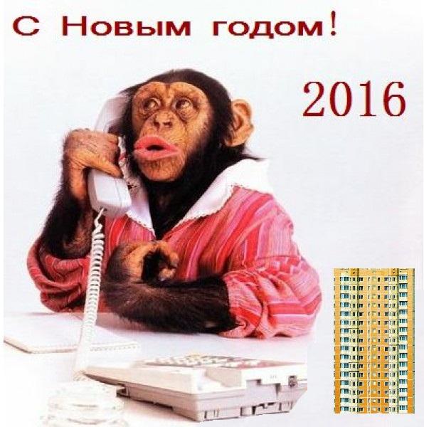 Год обезьяны 2016 шутки поздравления приколы конкурсы